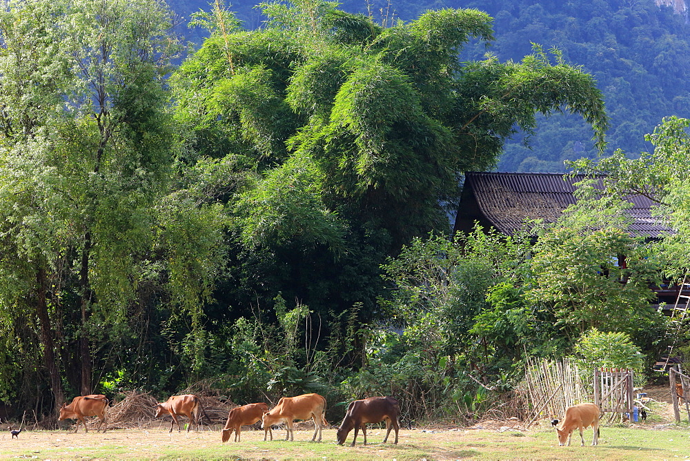 Mountainsides in rural Laos near the town of Vang Vieng, Laos, Indochina, Southeast Asia, Asia