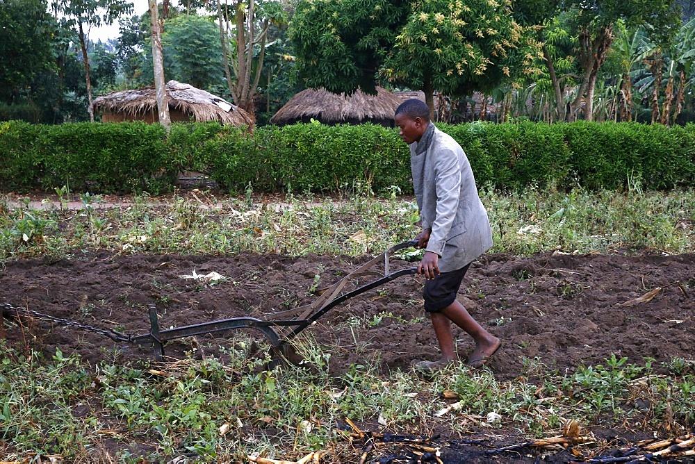 Ploughing, Kigumba, Uganda, Africa