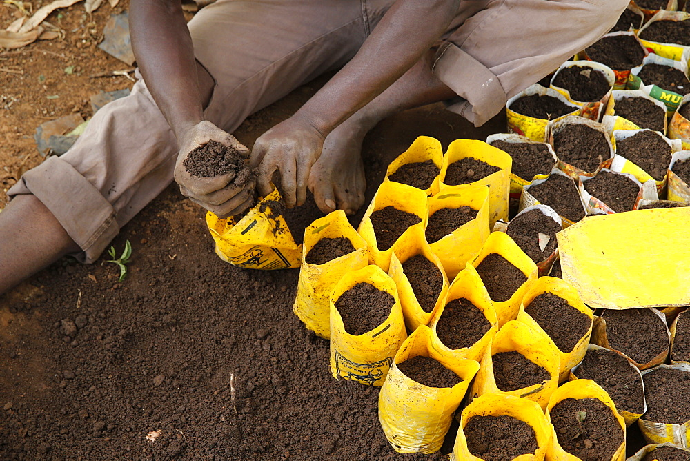 Innocent Mbabazi runs a tree nursery. He received 2 loans from ENCOT microfinance.