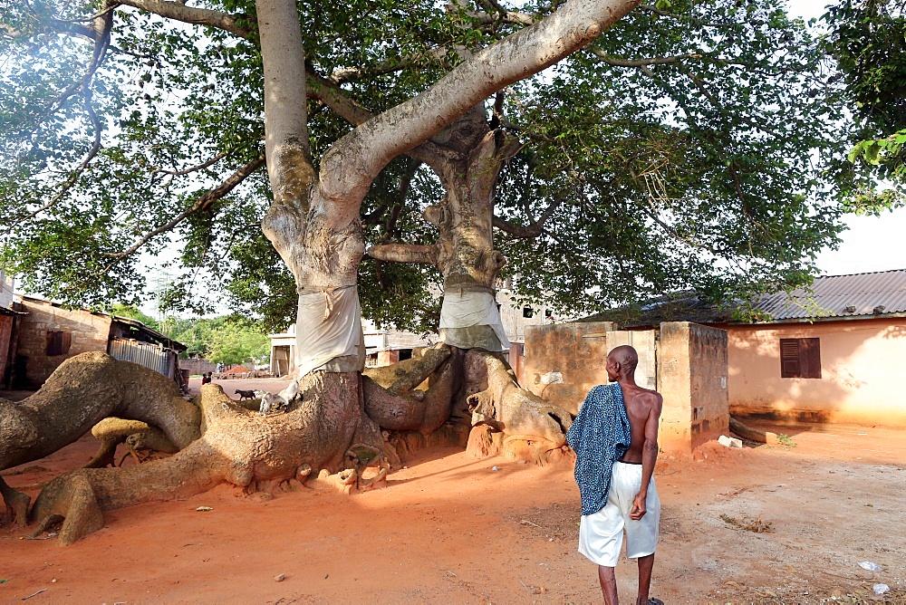 Voodoo sacred tree, Togoville, Togo, West Africa, Africa
