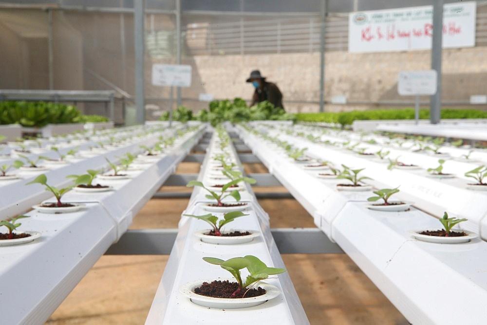 Organic hydroponic vegetable farm. Lettuce rows in greenhouse. Dalat. Vietnam.