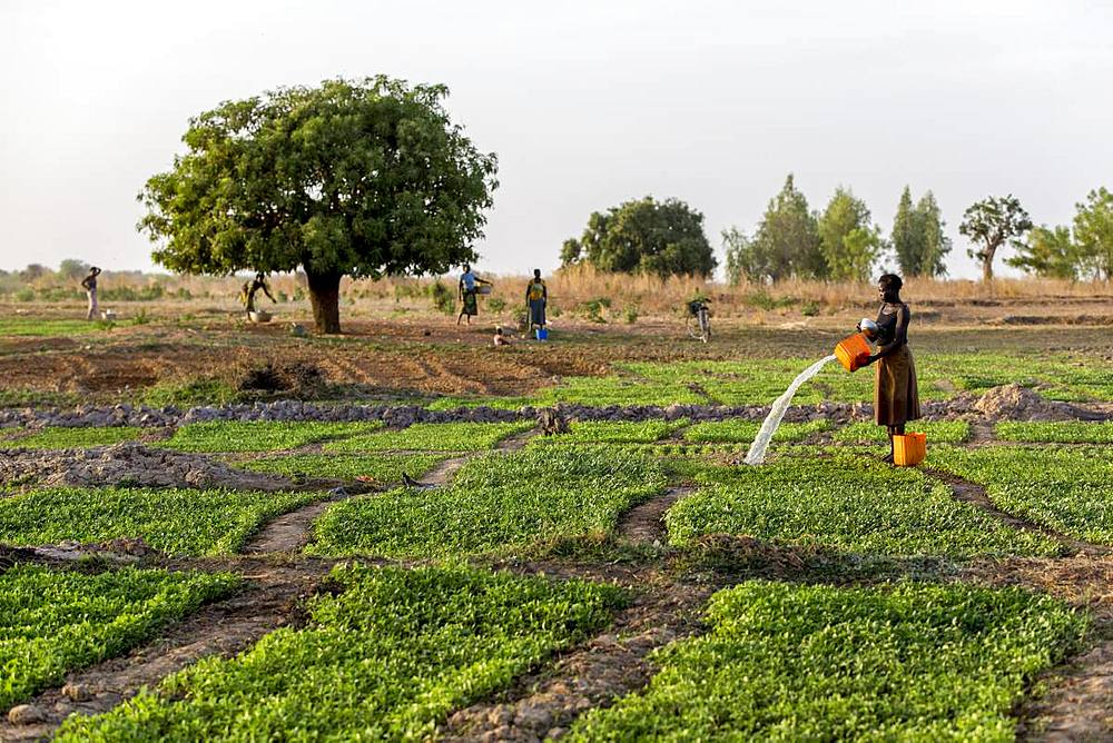 Togolese woman watering a field in Karsome, Togo, West Africa, Africa