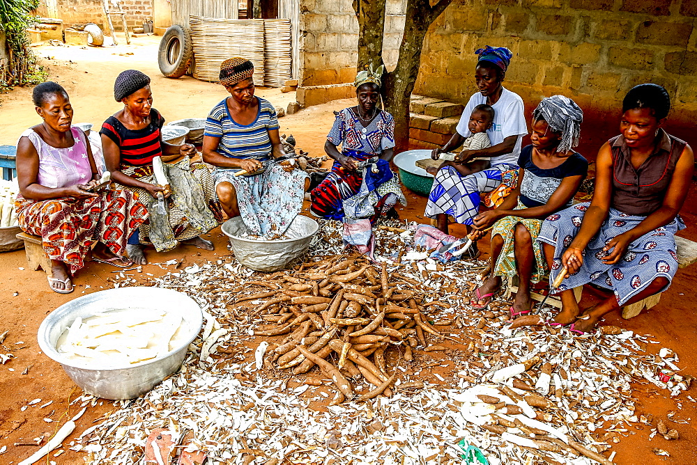 Group of women peeling cassava on the outskirts of Lome, Togo, West Africa, Africa