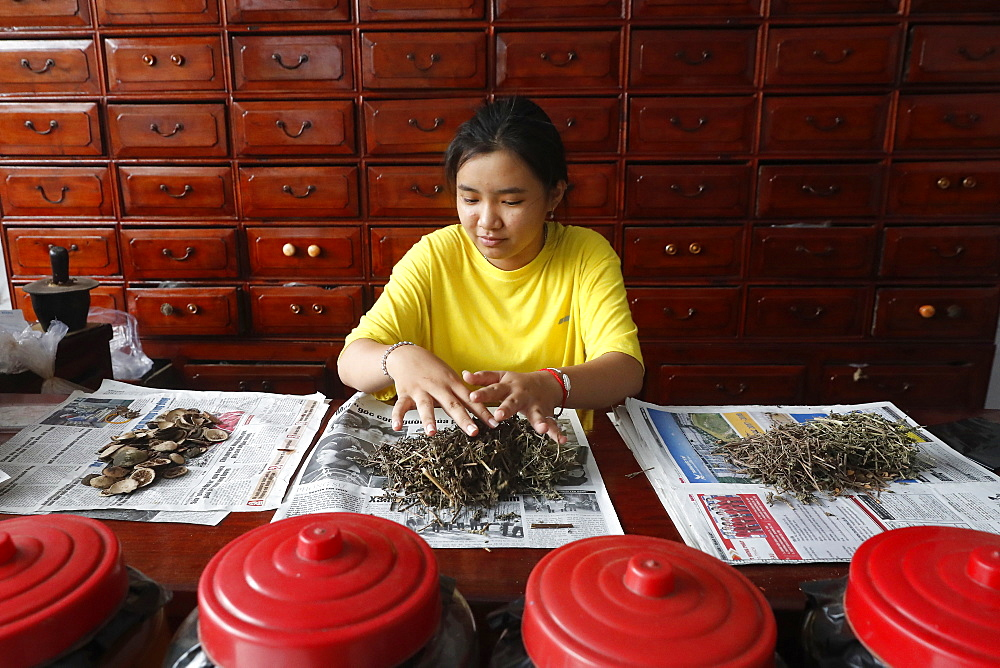 Woman working in a traditional Chinese pharmacy, Ha Tien, Vietnam, Indochina, Southeast Asia, Asia - 809-7632