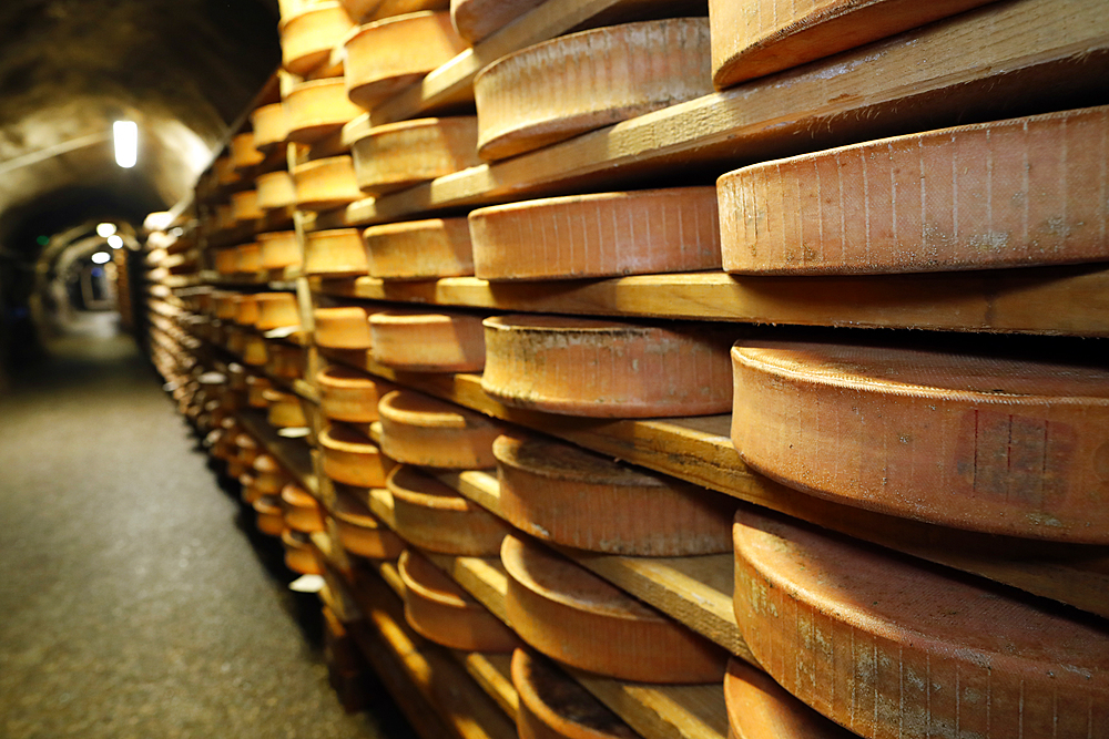 Artisanal Beaufort cheese in refining in a traditional cellar. Rognaix. France.