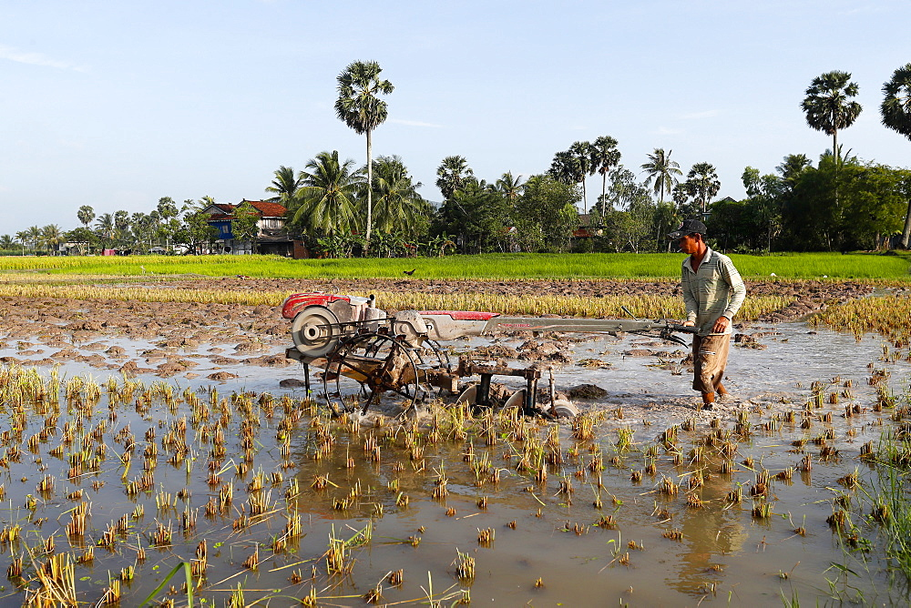 Asian farmer plowing rice field with a tractor, Kep, Cambodia, Indochina, Southeast Asia, Asia