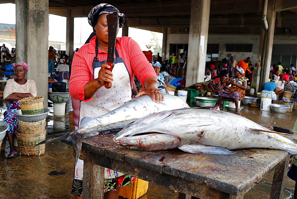 Tuna fish, Fish market, Port of Lome, Togo, West Africa, Africa