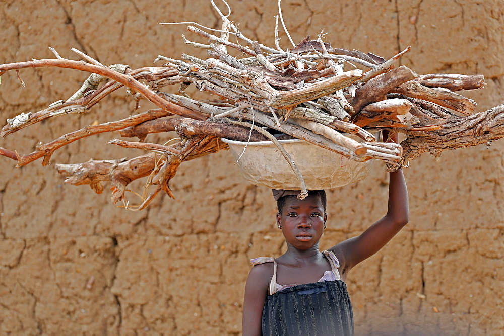 Young girl carrying firewood on her head, Datcha-Attikpaye, Togo, West Africa, Africa