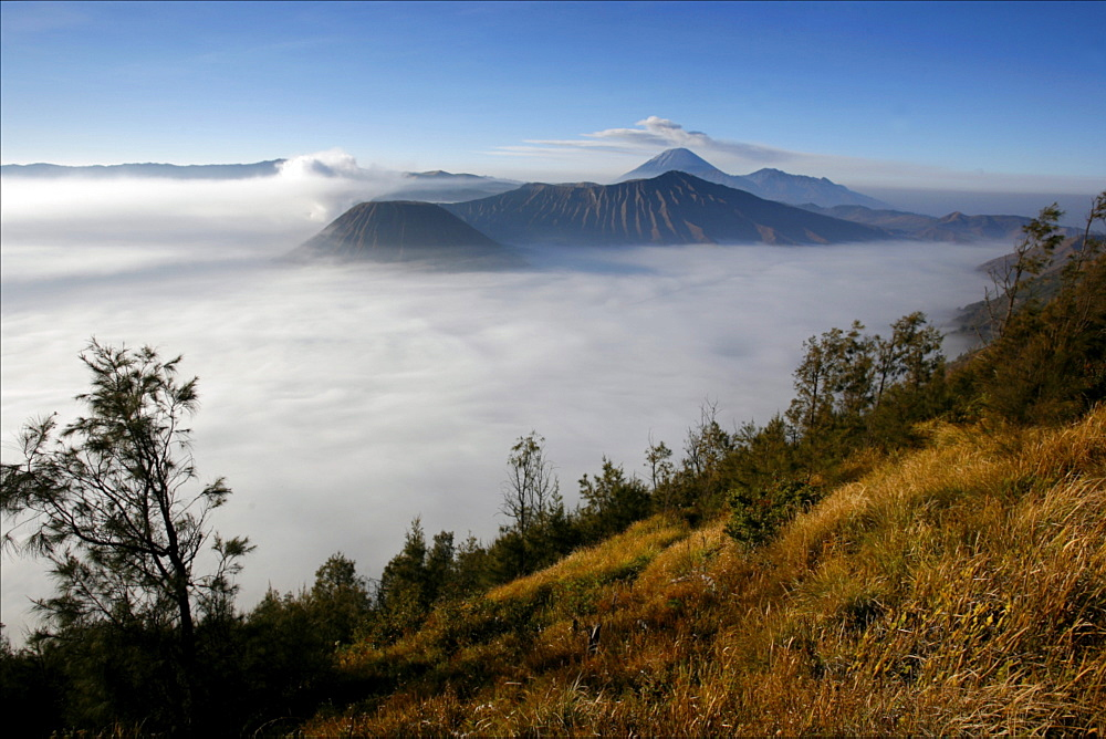 View at dawn on the Bromo and Semeru volcanoes, in the Tennger caldera, Java, Indonesia, Southeast Asia, Asia