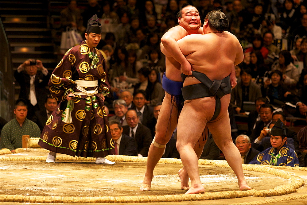 Two sumo wrestlers pushing hard to put their opponent out of the circle, sumo wrestling competition, Tokyo, Japan, Asia - 814-1525