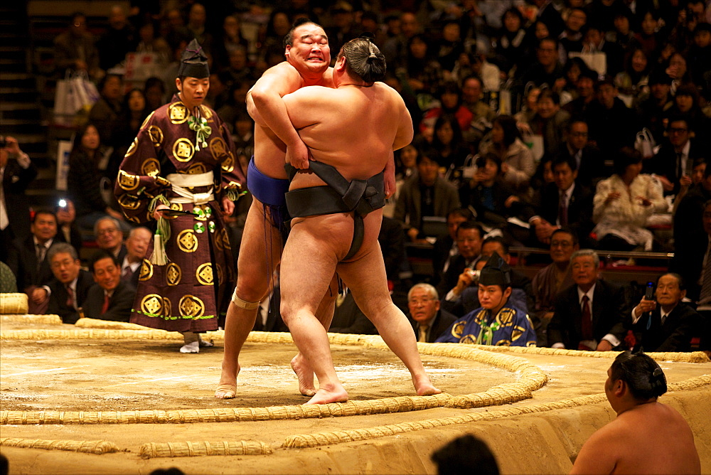 Two sumo wrestlers pushing hard to put their opponent out of the circle, sumo wrestling competition, Tokyo, Japan, Asia - 814-1528