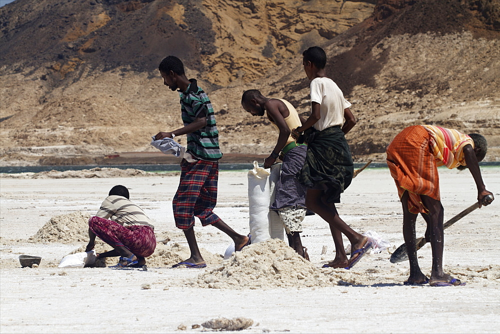 Salt caravan in Djibouti, going from Assal Lake to Ethiopian mountains, Djibouti, Africa - 814-1543