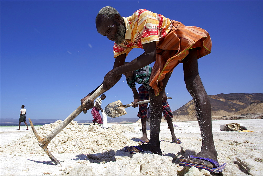 Salt caravan in Djibouti, going from Assal Lake to Ethiopian mountains, Djibouti, Africa - 814-1544