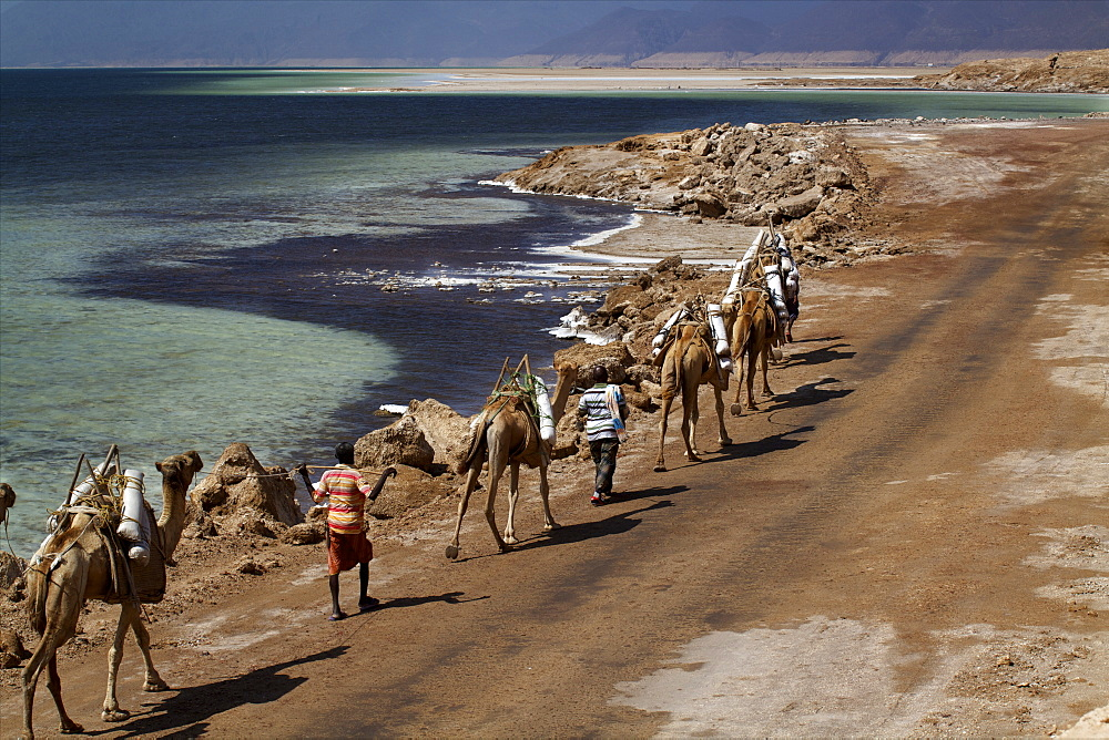 Salt caravan in Djibouti, going from Assal Lake to Ethiopian mountains, Djibouti, Africa  - 814-1547