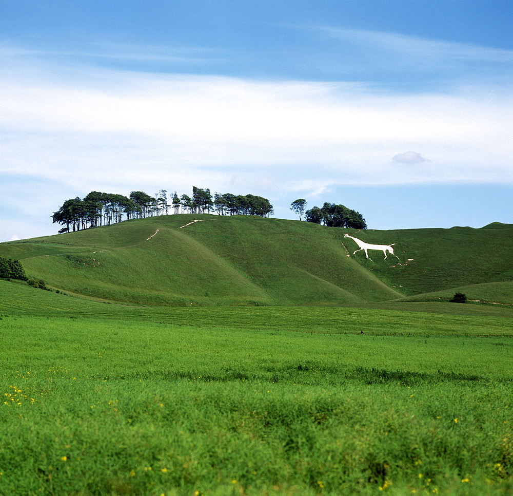White Horse, Cherhill, Wiltshire, England, United Kingdom, Europe