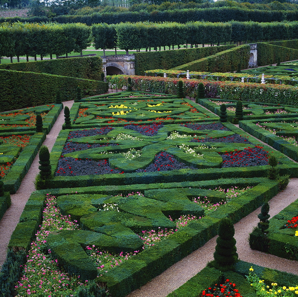 Box hedges, topiary shapes and dwarf dahlias in the Garden of Love, Chateau de Villandry, UNESCO World Heritage Site, Pays de la Loire, France, Europe