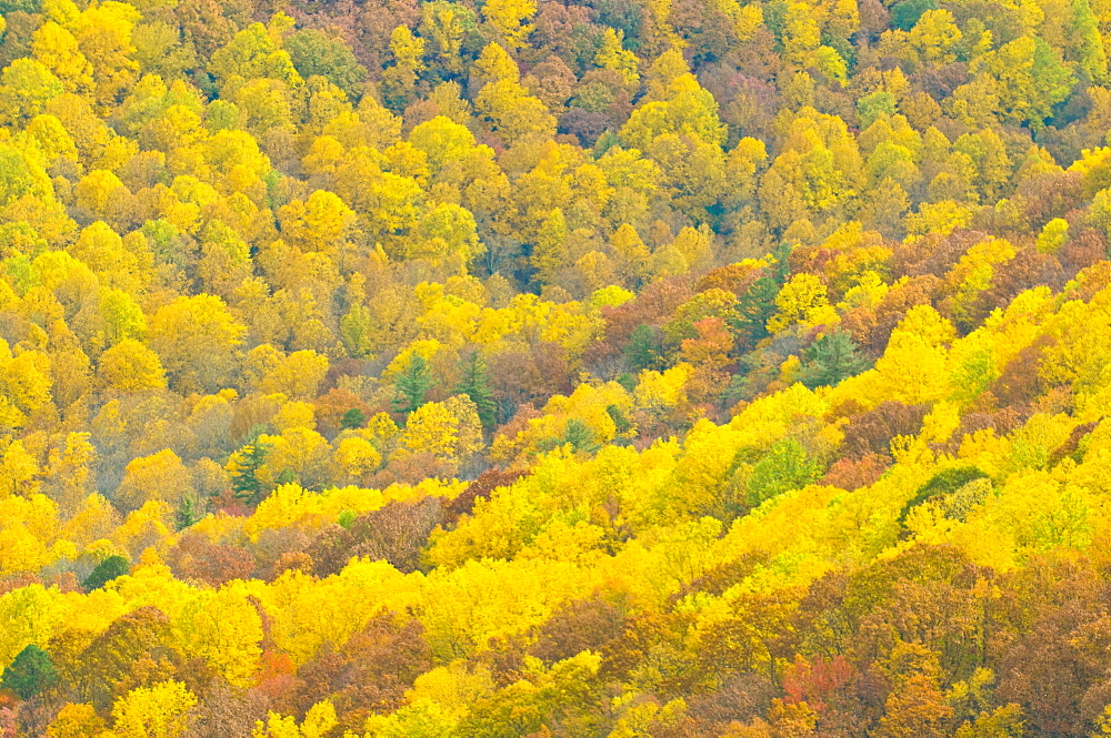 Beautiful foliage in the Indian summer, Blue Ridge Mountain Parkway, North Carolina, United States of America, North America