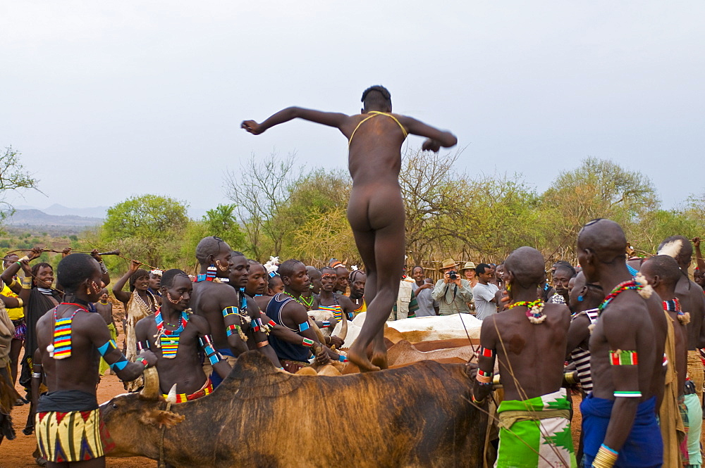 Young Hamer boy running above bulls to become a full adult, Jumping of the Bull ceremony, Omo Valley, Ethiopia, Africa