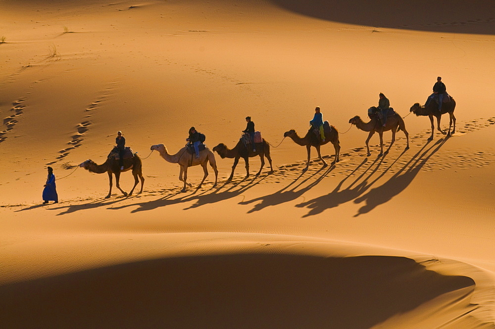 Camels in the dunes, Merzouga, Morocco, North Africa, Africa
