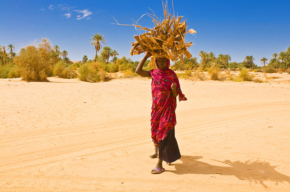 Woman carrying firewood, Ouadane, Mauritania, Africa