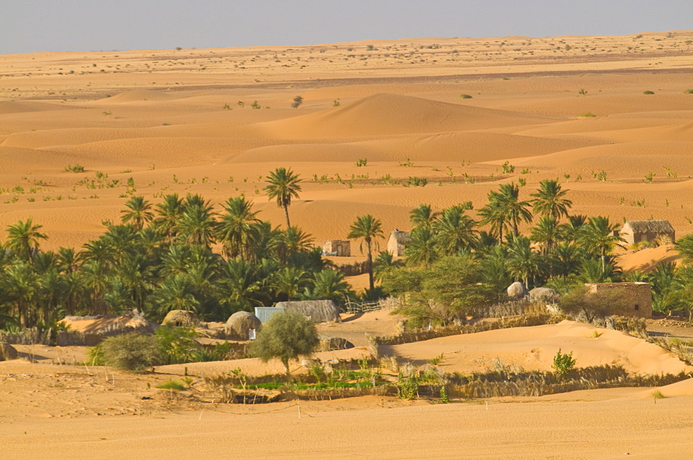 Little oasis between sand dunes at sunset, near Chinguetti, Mauritania, Africa