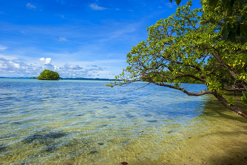 Little rock islet in the famous Rock islands, Palau, Central Pacific, Pacific