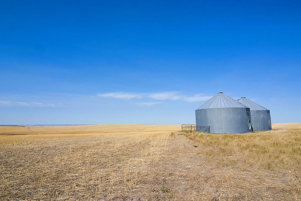 Lonely garner in a field, Badlands National Park, South Dakota, United States of America, North America