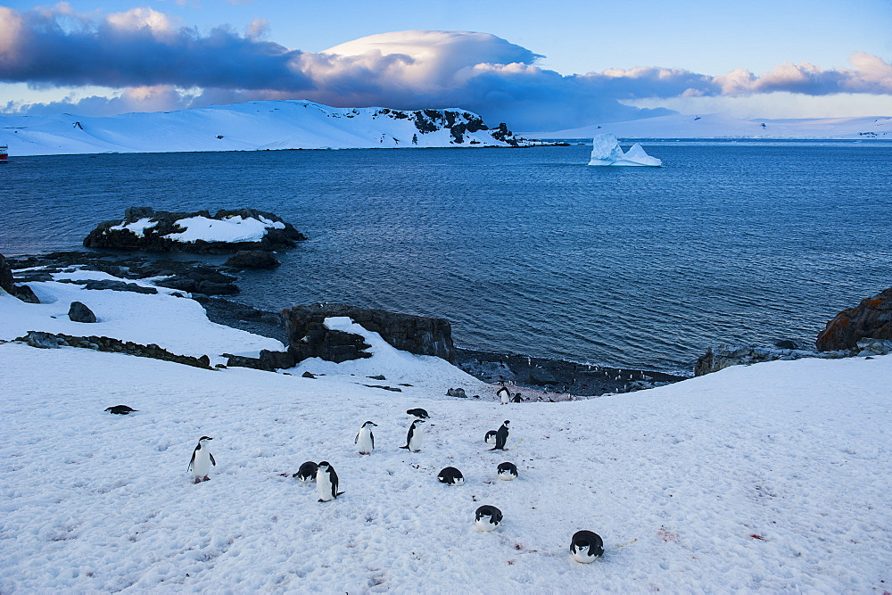 Chinstrap penguins (Pygoscelis antarcticus) colony on half Moon Bay, South Shetland Islands, Antarctica, Polar Regions