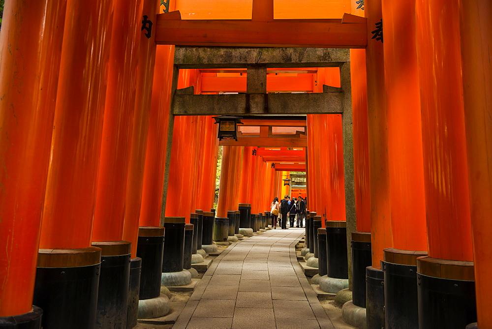 The Endless Red Gates of Kyoto's Fushimi Inari Shrine, Kyoto, Japan, Asia
