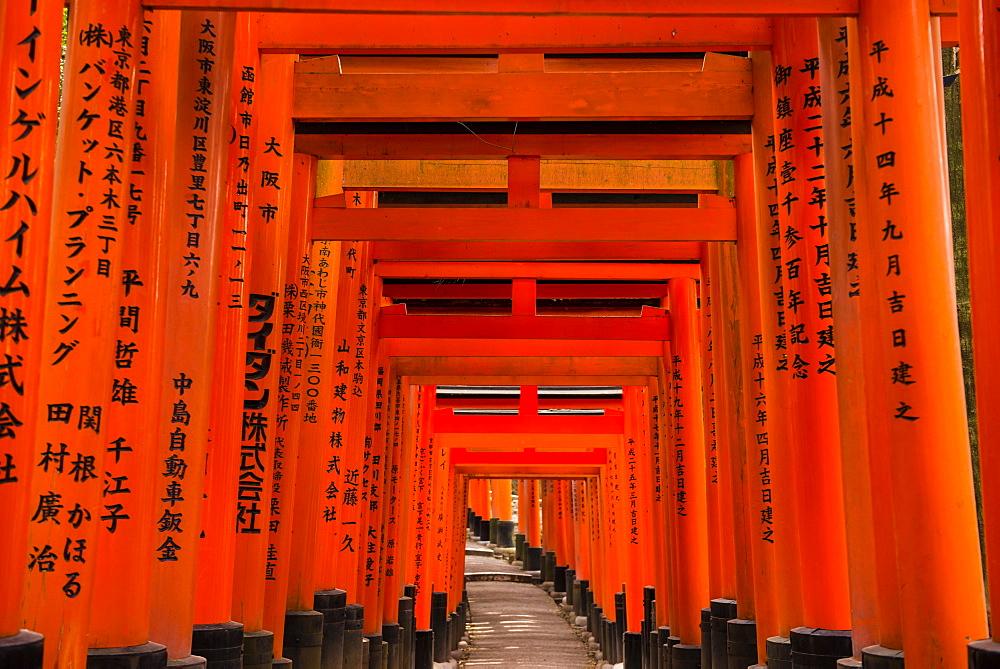 The Endless Red Gates (torii) of Kyoto's Fushimi Inari Shrine, Kyoto, Japan, Asia