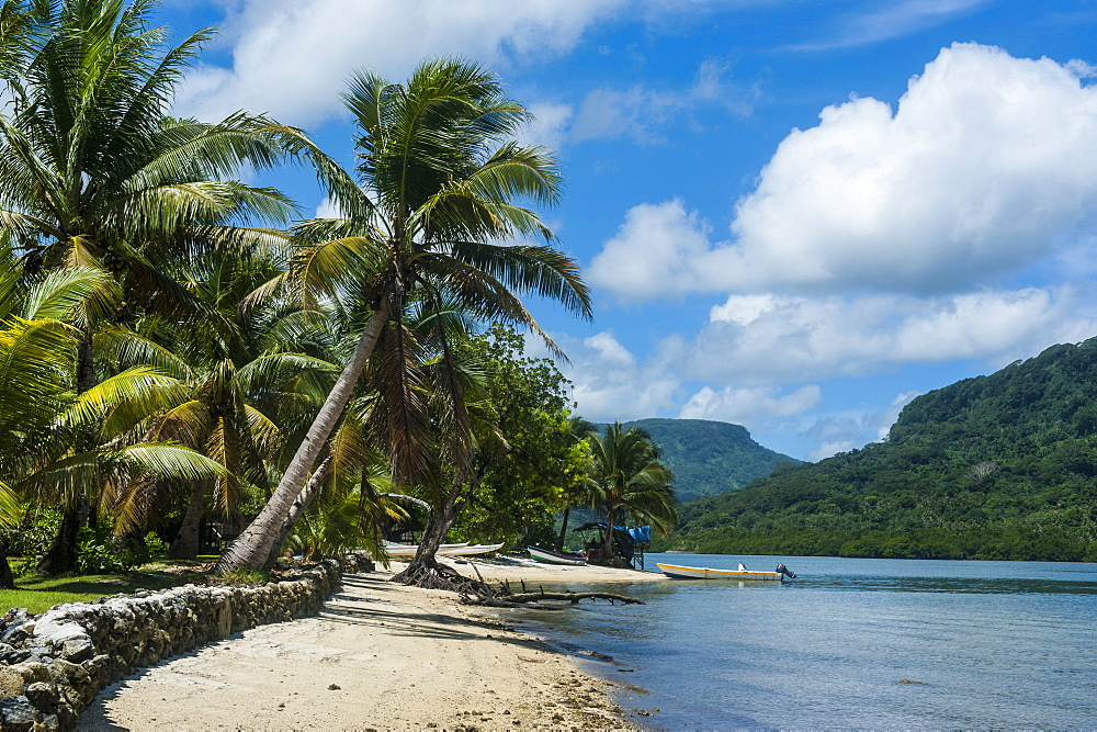 White sand beach with palm trees, Pohnpei (Ponape), Federated States of Micronesia, Caroline Islands, Central Pacific, Pacific