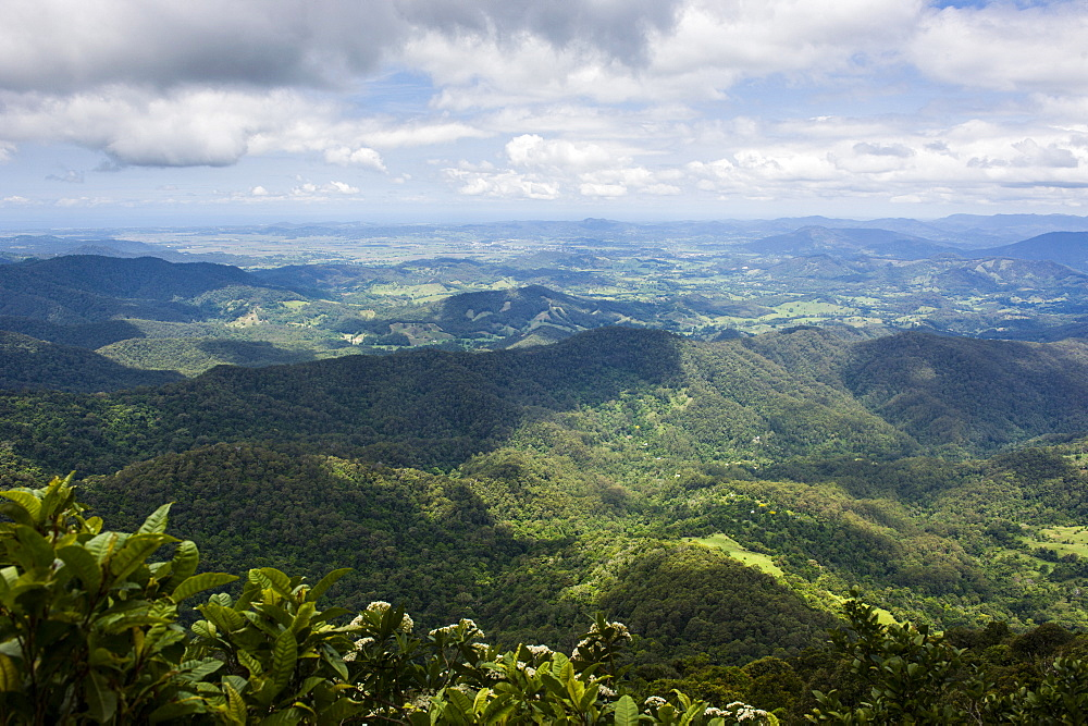 View in the Springbrook National Park, New South Wales, Australia, Pacific