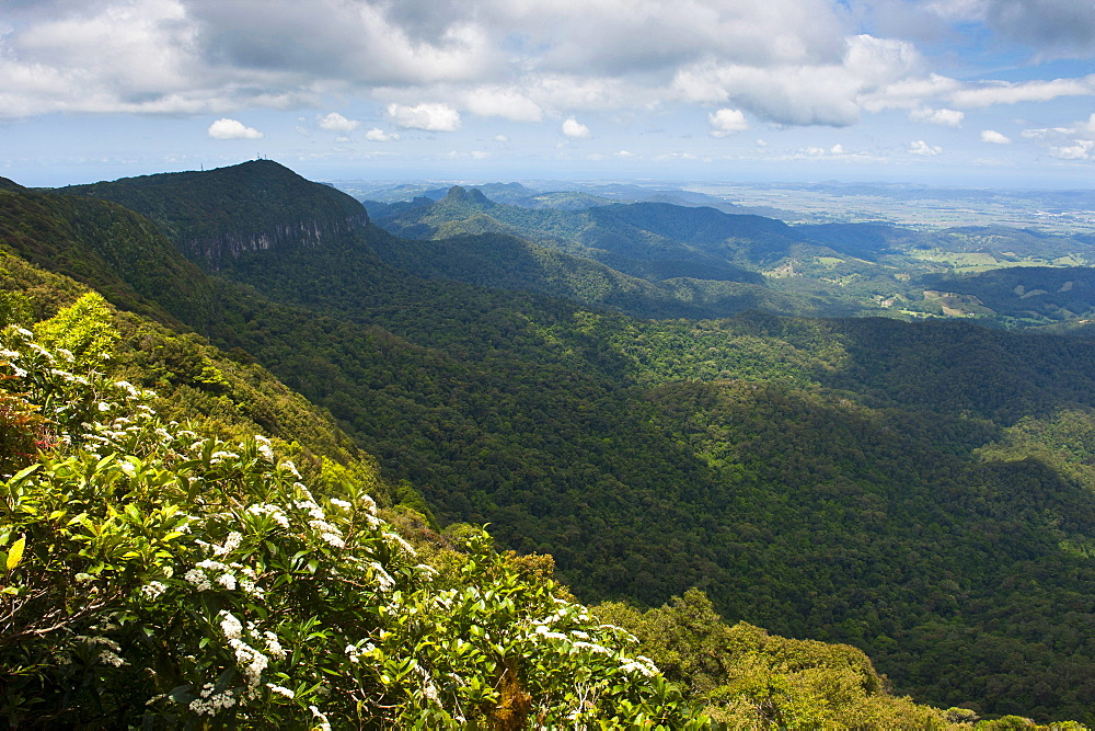 View over the Springbrook National Park, New South Wales, Australia, Pacific