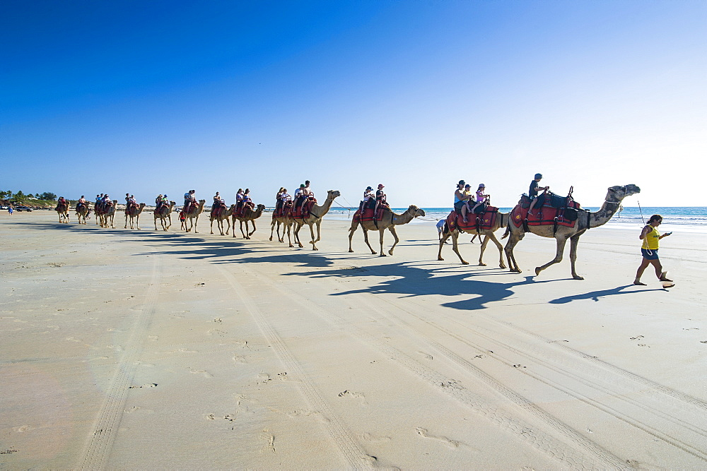 Tourists riding on camels on Cable Beach, Broome, Western Australia, Australia, Pacific