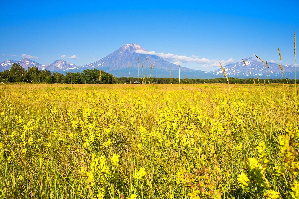 Wild flower field and the Avachinskaya Sopka volcano near Petropavlovsk-Kamchatsky, Kamchatka, Russia, Eurasia