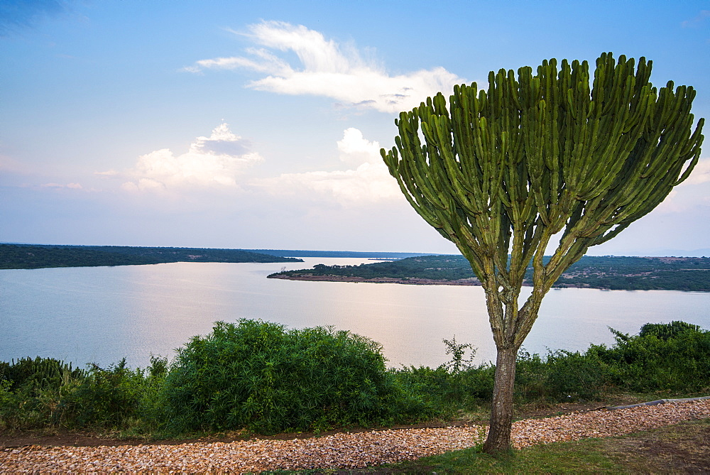 Cactus tree above the Kazinga Channel  linking Lake George and Lake Edward at sunset, Queen Elizabeth National Park, Uganda, East Africa, Africa