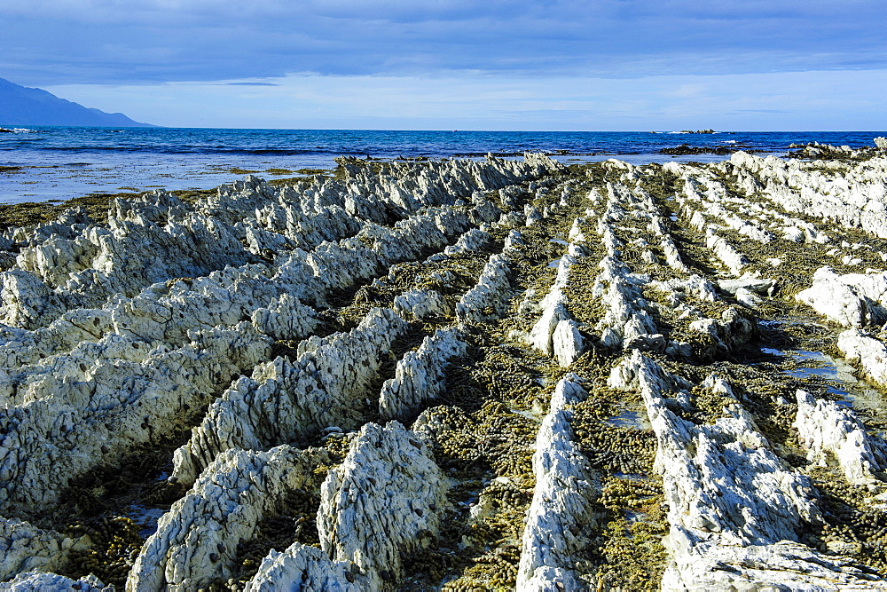 Beautiful limestone formations on the Kaikoura Peninsula, South Island, New Zealand, Pacific