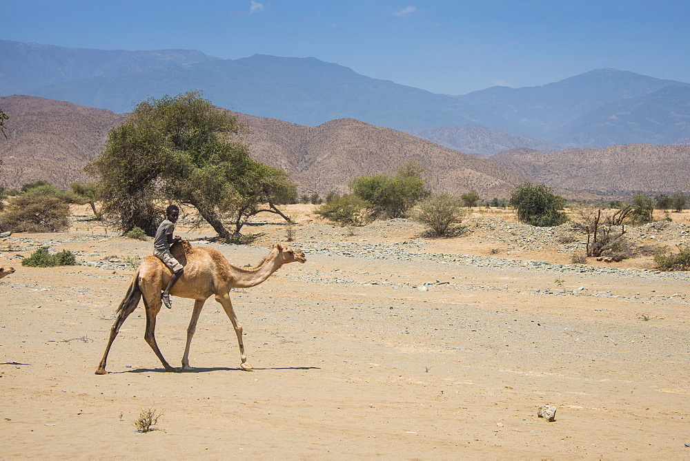 Boy riding on a camel in the lowlands of Eritrea, Africa