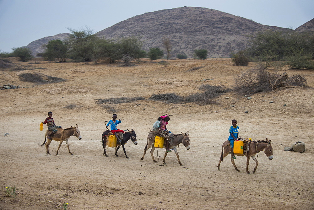 Young kids riding on donkeys to a water hole in the lowland of Eritrea, Africa