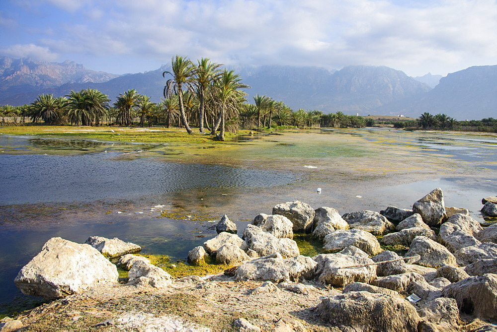 Swamps outside of Hadibo, capital of the island of Socotra, UNESCO World Heritage Site, Yemen, Middle East