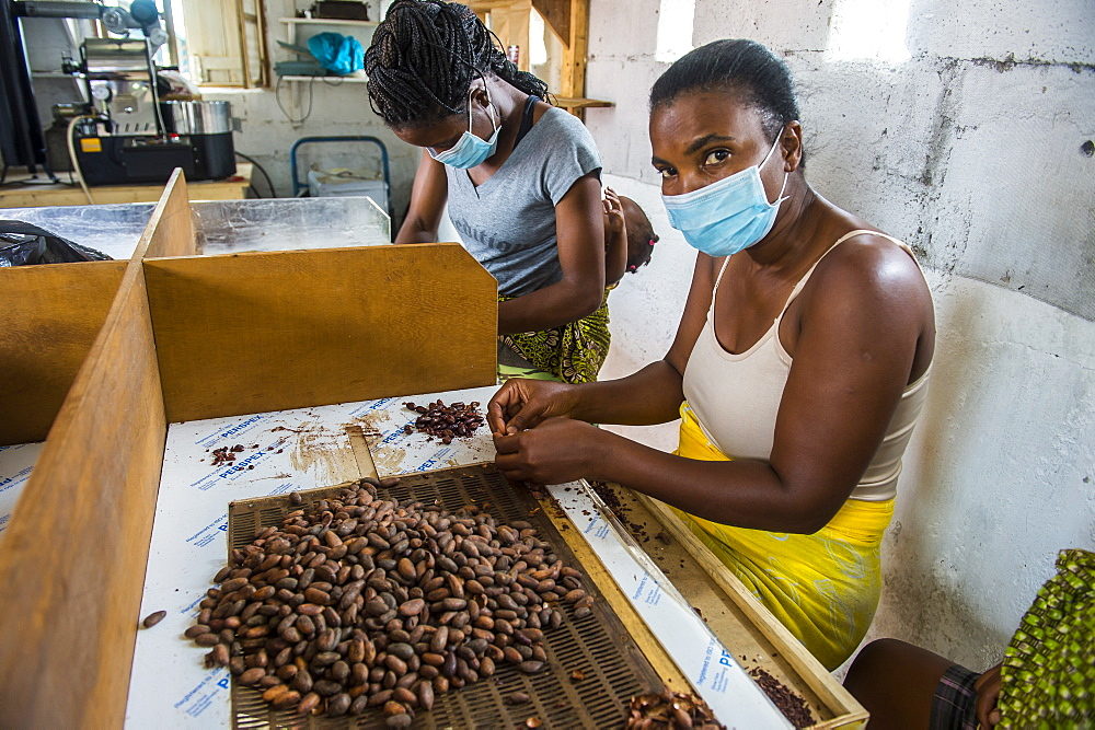 Women extracting chocolate from the cocoa beans, Plantation Roca Monte Cafe, Sao Tome, Sao Tome and Principe, Atlantic Ocean, Africa