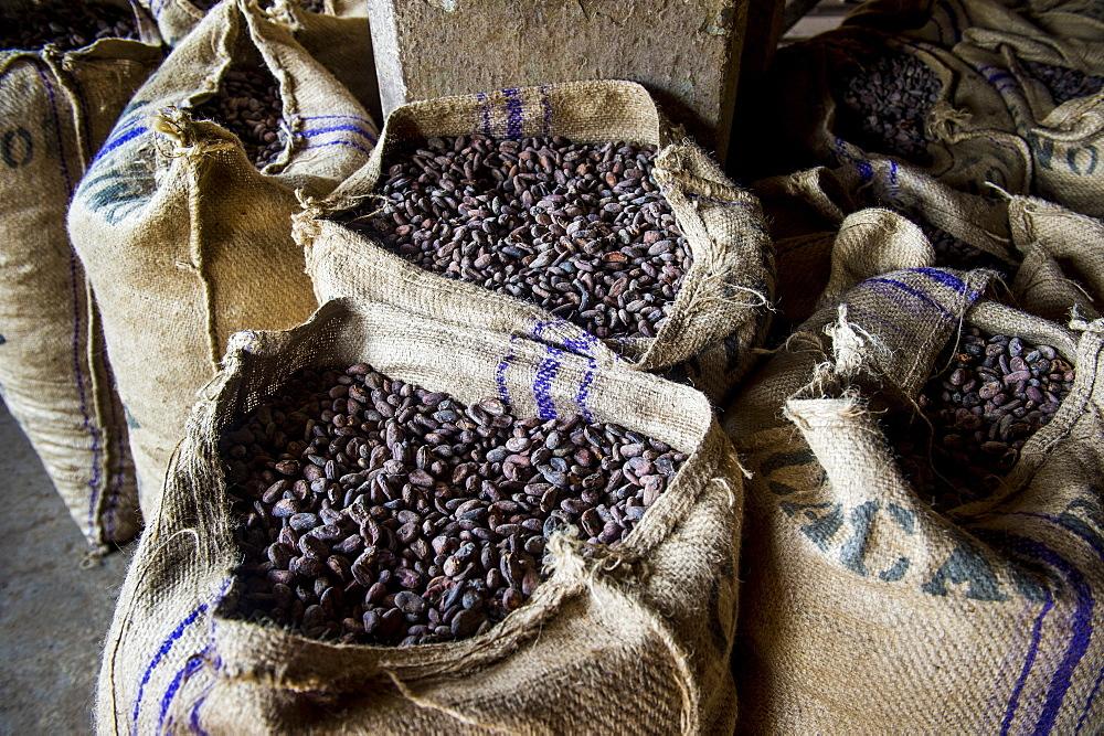 Bags full of cocoa beans, Cocoa plantation Roca Aguaize, East coast of Sao Tome, Sao Tome and Principe, Atlantic Ocean, Africa