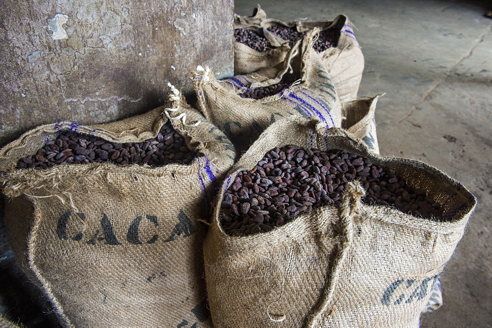 Bags full of cocoa beans, Cocoa plantation Roca Aguaize, East coast of Sao Tome, Sao Tome and Principe, Atlantic Ocean, Africa