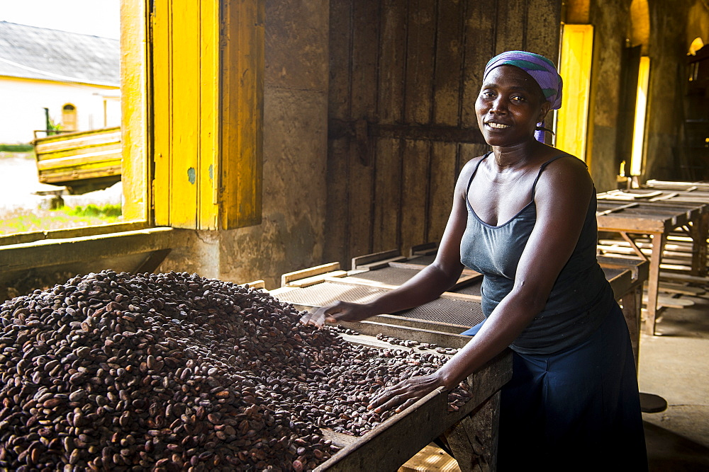 Woman collecting cocoa beans, Cocoa plantation Roca Aguaize, East coast of Sao Tome, Sao Tome and Principe, Atlantic Ocean, Africa
