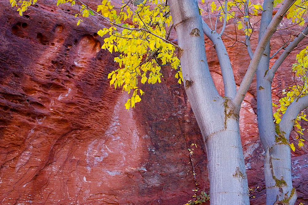 Kolob Canyon in autumn, Zion National Park, Utah, USA