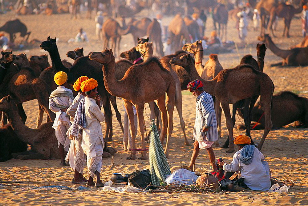 November camel fair, Pushkar, Rajasthan, India - 817-10094