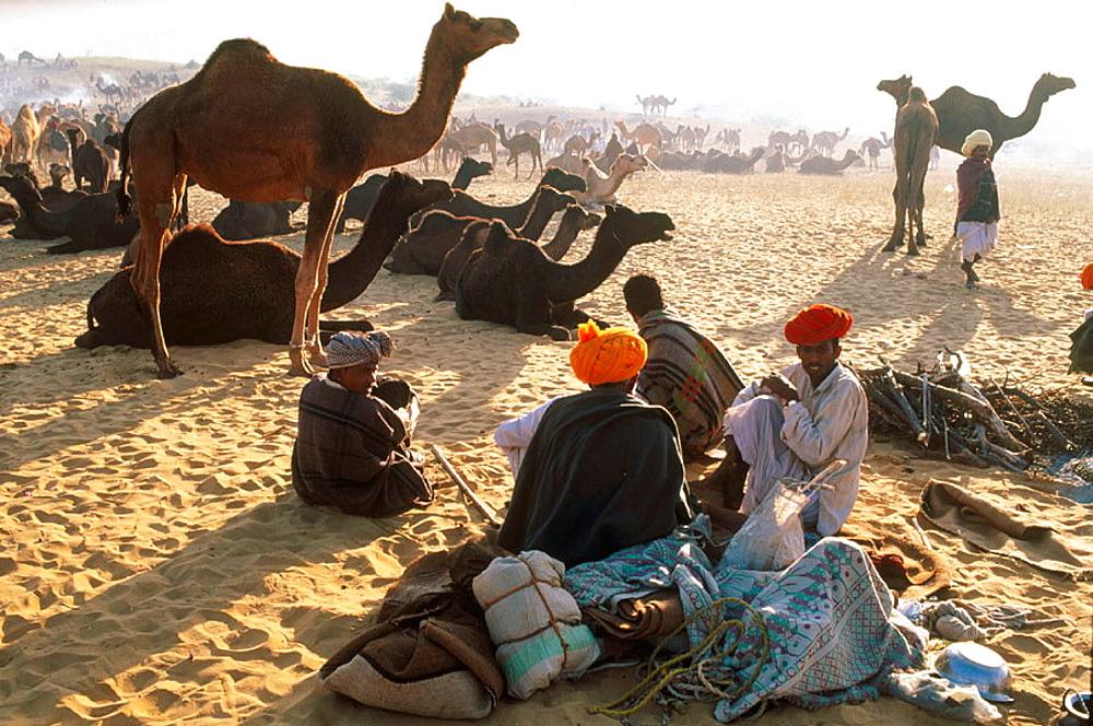November camel fair, Pushkar, Rajasthan, India - 817-10096