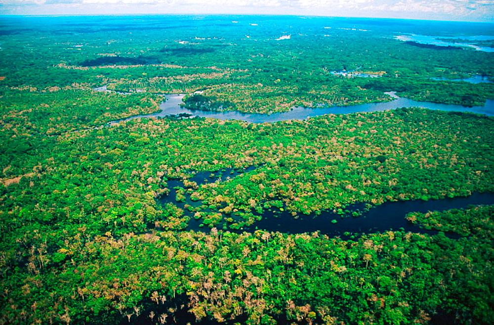 Tropical forest, Amazon area, Brazil