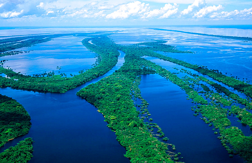Archipelago of Anavilhanas at Amazon River, Brazil - 817-10365