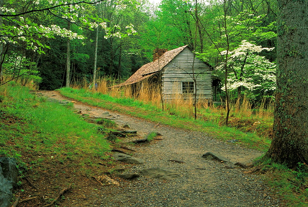 Bud Ogle Cabin and dogwoods, Great Smoky Mountains National Park, Tennessee, USA
